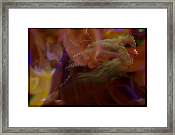 Cardinal And Abstract Framed Print