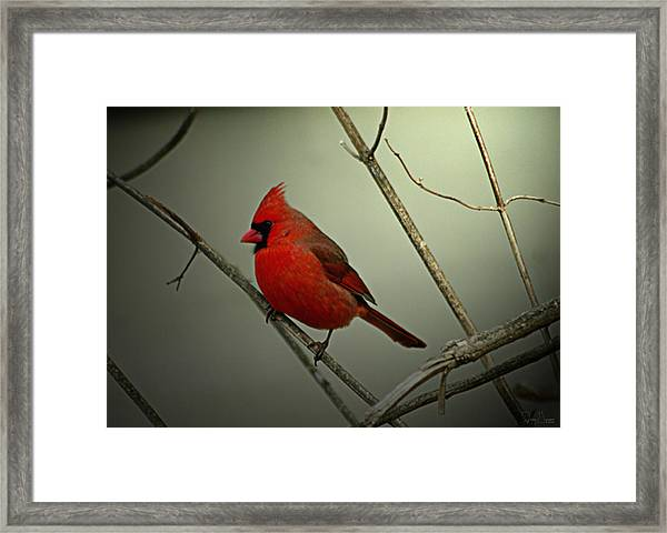 Cardinal And The Setting Sun Framed Print