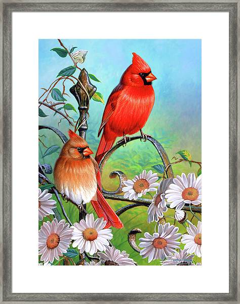 Cardinal Day 3 Framed Print
