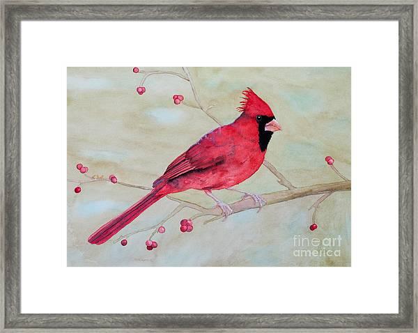 Cardinal II Framed Print