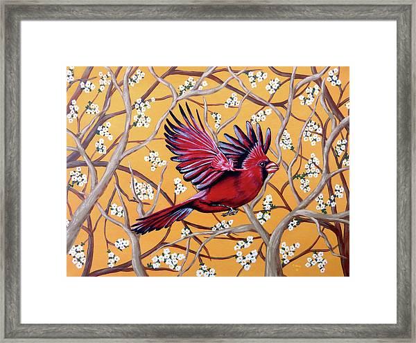 Cardinal In Flight Framed Print