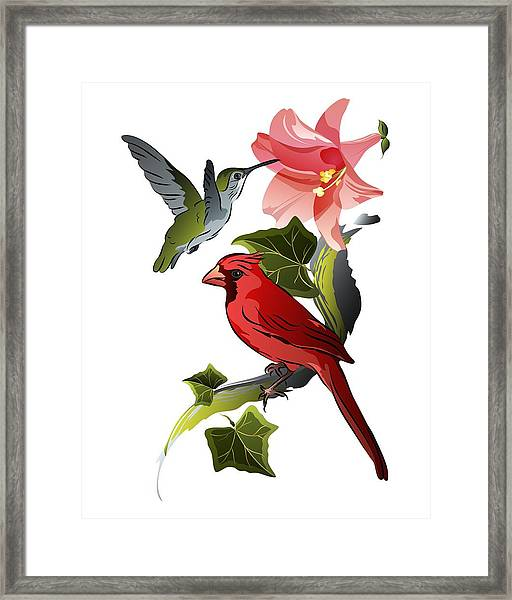 Cardinal On Ivy Branch With Hummingbird And Pink Lily Framed Print