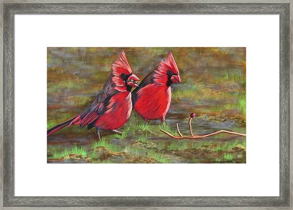Cardinal Two Framed Print by Tracey Hunnewell