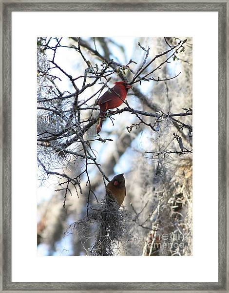 Cardinals In Mossy Tree Framed Print