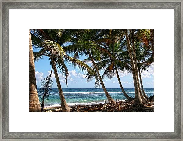 Caribbean Palms Framed Print