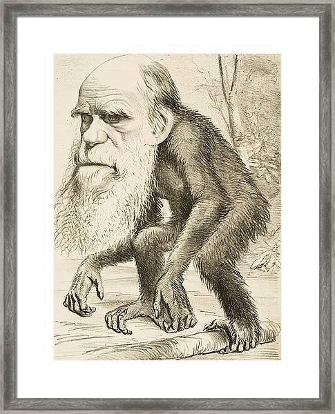 Caricature Of Charles Darwin Framed Print