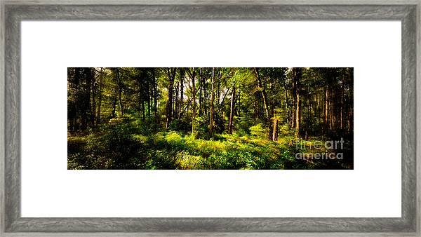 Carolina Forest Framed Print