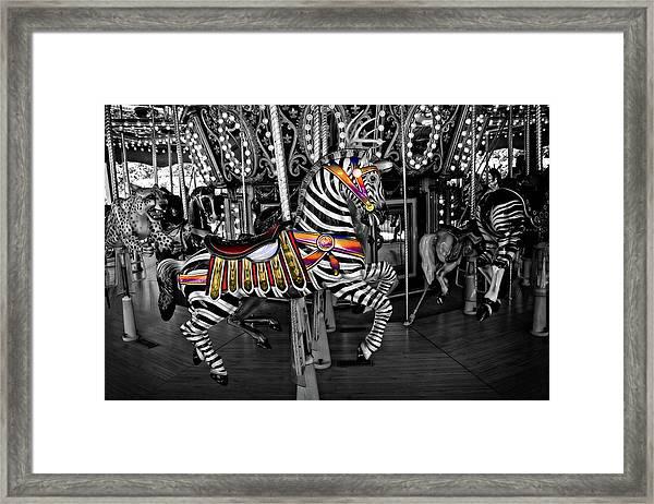 Carousel Zebra Series 2222 Framed Print
