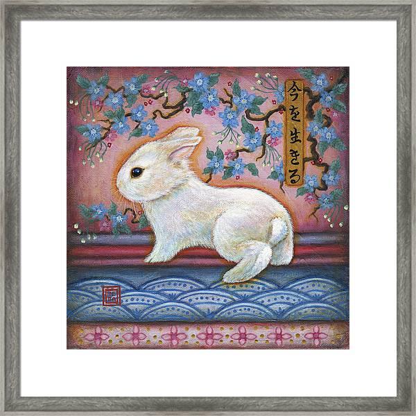 Carpe Diem Rabbit Framed Print