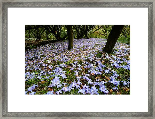 Carpet Of Petals Framed Print