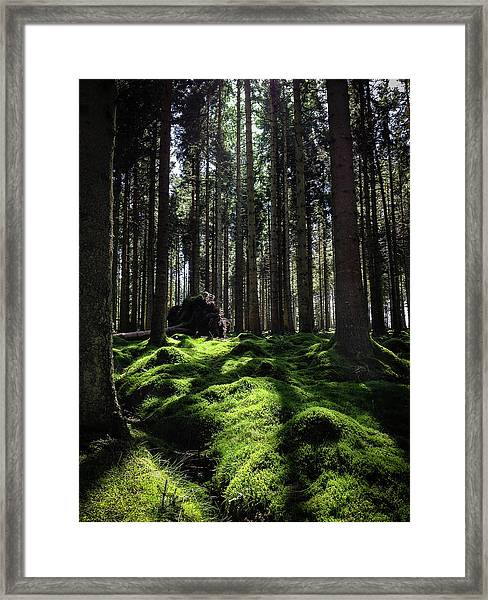 Carpet Of Verdacy Framed Print