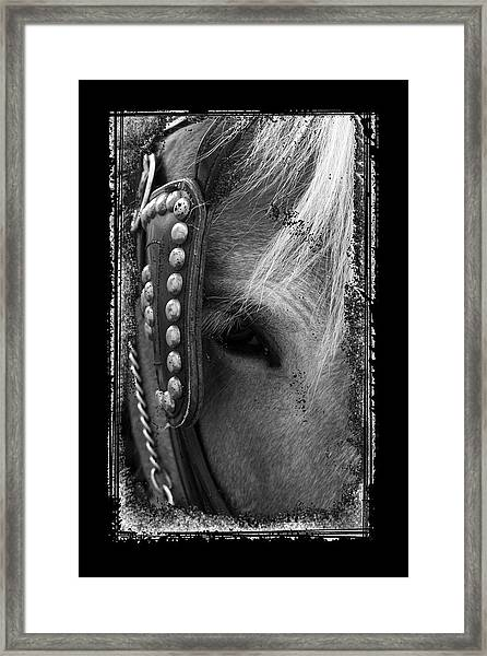 Carriage Horse B And W Framed Print