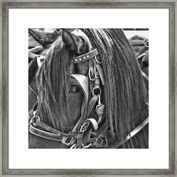 Carriage Horse Ride Framed Print