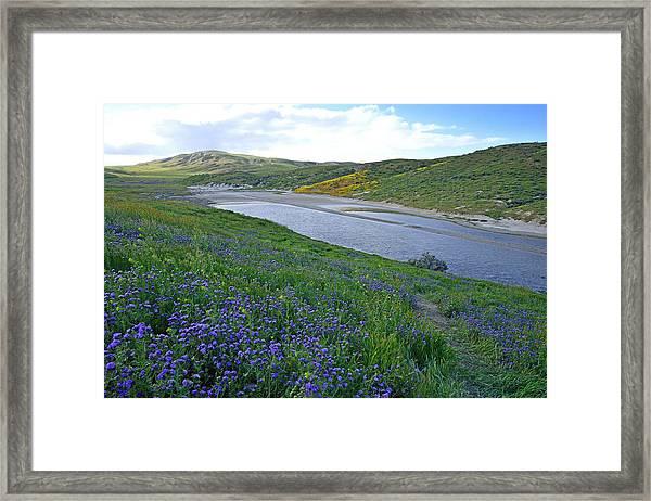 Carrizo Pond And Wildflowers Framed Print