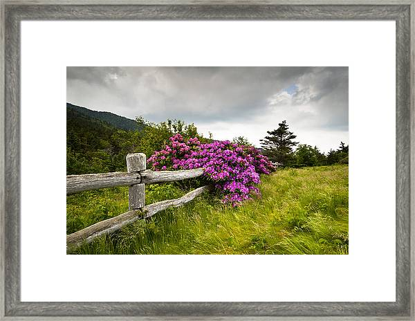 Carvers Gap Roan Mountain State Park Highlands Tn Nc Framed Print