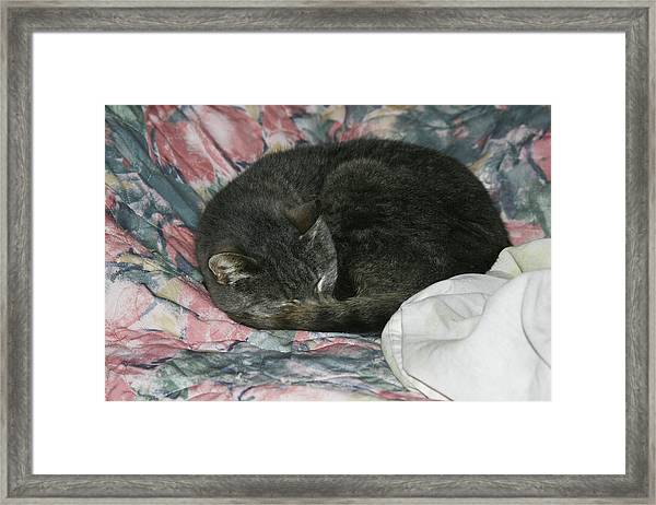 Cas-1 Framed Print