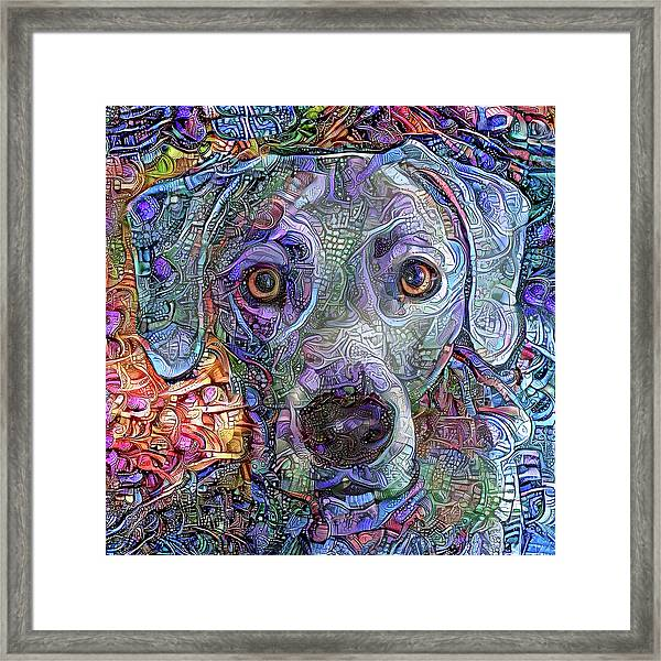 Cash The Blue Lacy Dog Closeup Framed Print