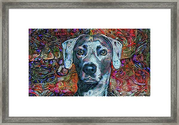 Cash The Blue Lacy Dog Framed Print