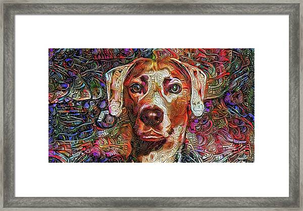 Cash The Lacy Dog Framed Print