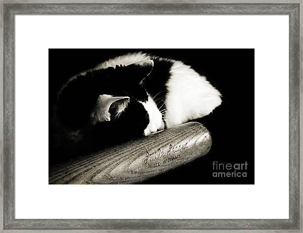 Cat And Bat Framed Print