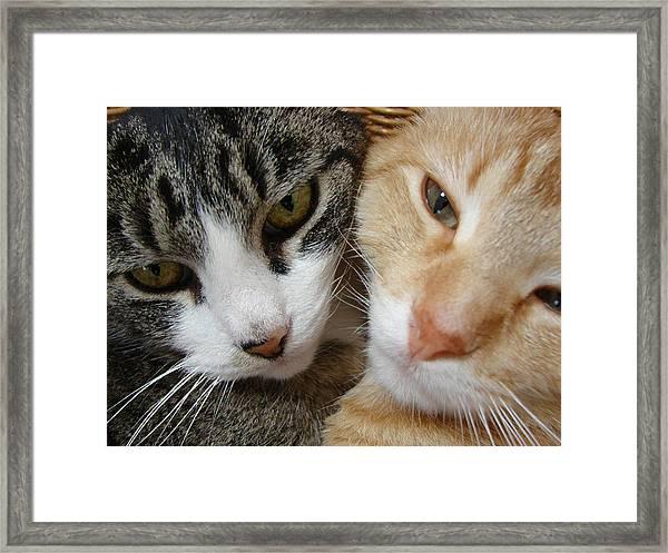 Cat Faces Framed Print