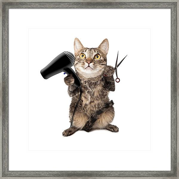 Cat Groomer With Dryer And Scissors Framed Print