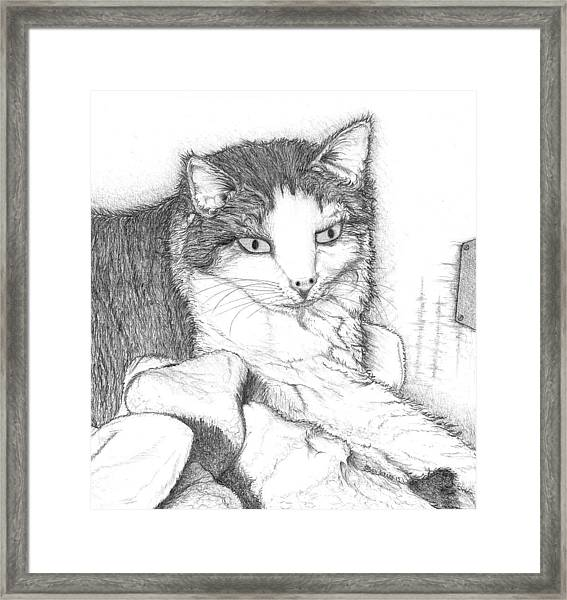 Domestic Cat Framed Print