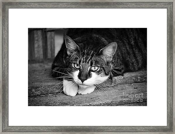 Cat Naps 2 Framed Print