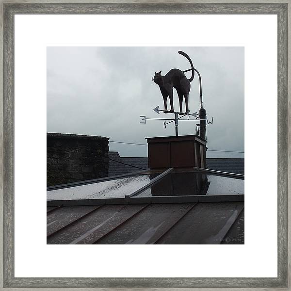 Cat On A Cool Tin Roof Framed Print