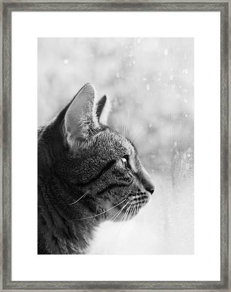 November Rain Framed Print