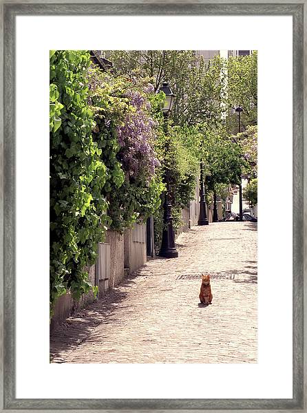 Cat On Cobblestone Framed Print
