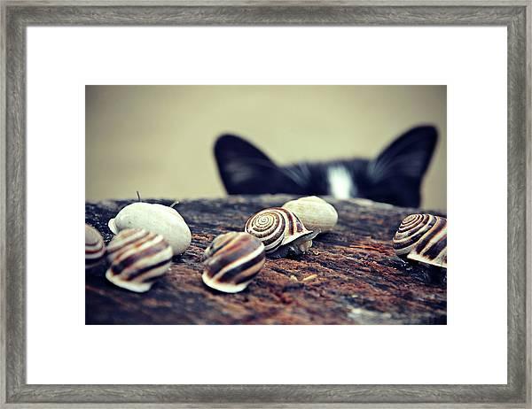 Cat Snails Framed Print