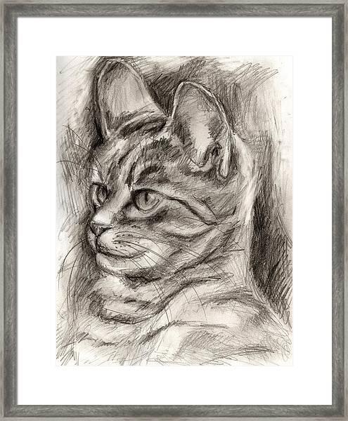 Cat Study Drawing No Three Framed Print