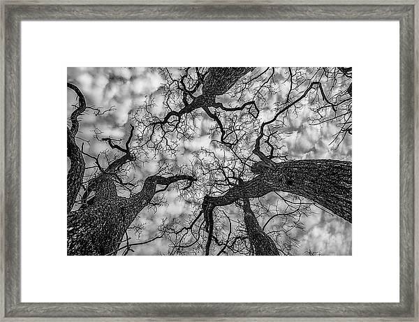 Catalpa And Altostrato Q Framed Print