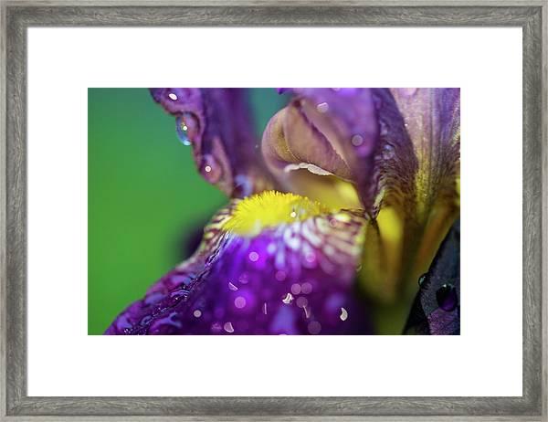 Catching Raindrops  Framed Print