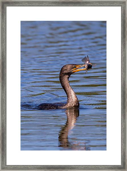 Catfish Dinner Framed Print