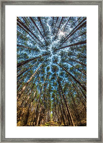 Cathedral In The Pines Framed Print