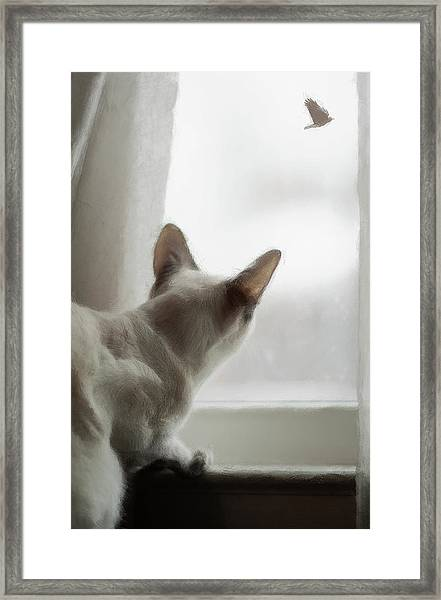 Cat In The Window Framed Print