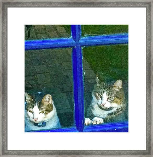 Cats On Baylor Street Framed Print