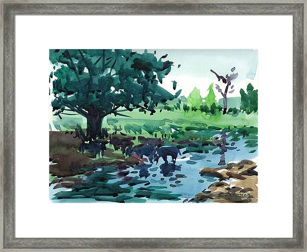 Cattle In The River Framed Print