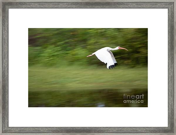 Caught In Flite Framed Print