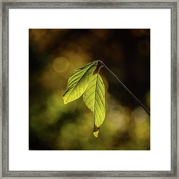 Caught In The Light Framed Print