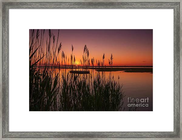 Cedar Beach Sunset In The Reeds Framed Print