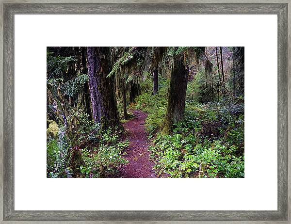 Cedar Creek Trail #3 Framed Print