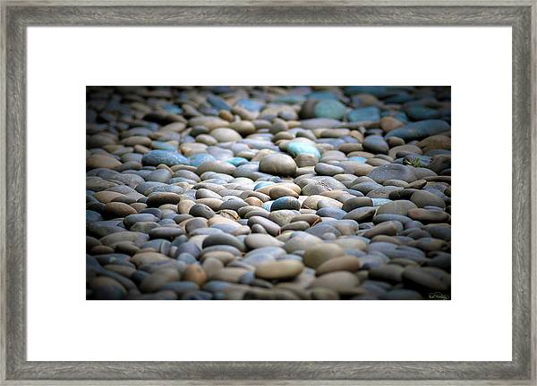 Framed Print featuring the photograph Centered Focus by Dee Browning
