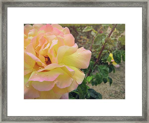 Centerfold Framed Print by JAMART Photography