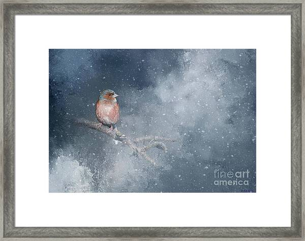 Chaffinch On A Cold Winter Day Framed Print