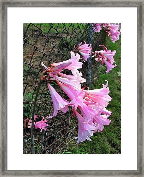 Chain Lillies Framed Print