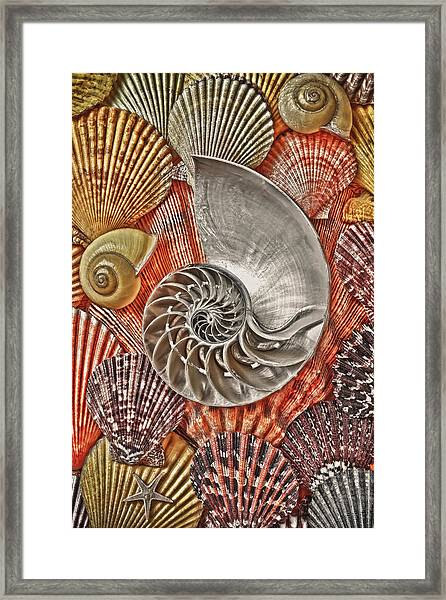 Chambered Nautilus Shell Abstract Framed Print