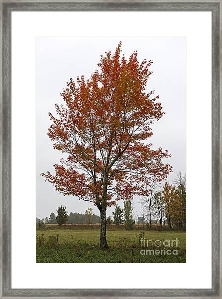 Change Of Season.. Framed Print